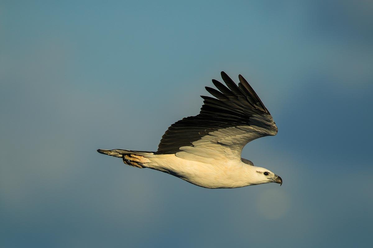 things-to-do-swan-lake-nsw-01