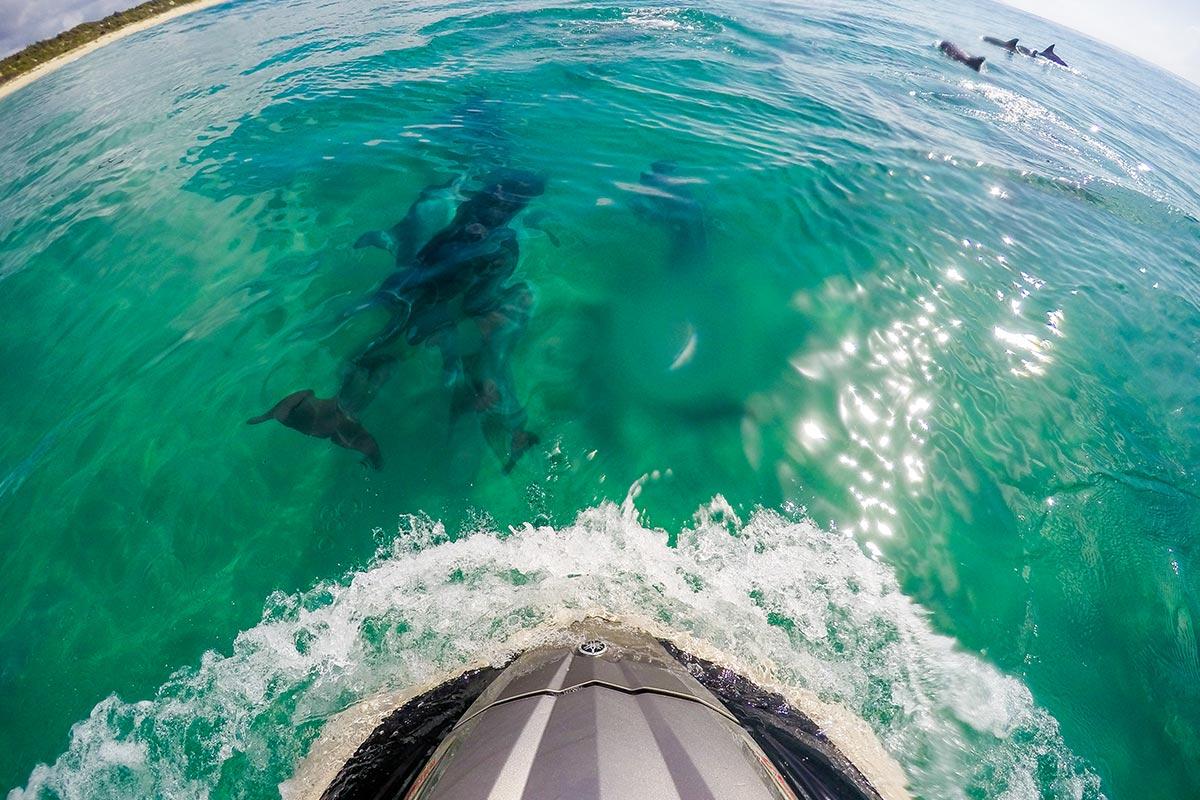 things-to-do-swan-lake-nsw-maring-wildlife